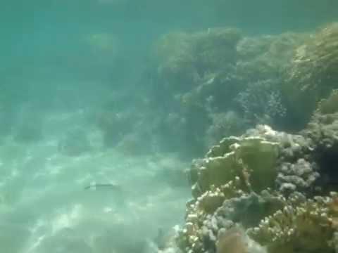 marsa, asalay, alam, egipt, nurkowanie, diving, scuba, tauchen, underwater, unterwasser