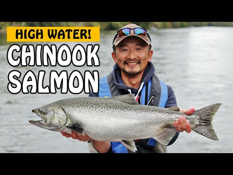 HIGH WATER CHINOOK SALMON AND MUSHROOM FORAGING! Somass River On Vancouver Island | Fishing With Rod