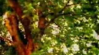 Bone Thugs-N-Harmony - Strictly For My Grind