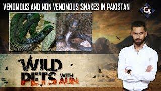Venomous and Non Venomous Snakes in Pakistan | Wild Pets with Aun 4th August 2019