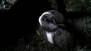 Уход и содержание кроликов для начинающих //Жизнь в деревне!!!