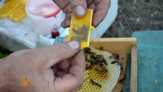 Простий спосіб мітити бджоломатки.