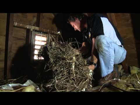 attic-insulation-done-wrong…-and-how-to-do-it-right!
