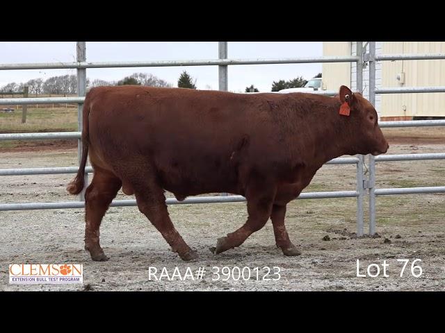 Clemson Extension Bull Test Lot 76