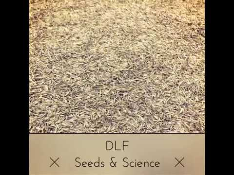 DLF seeds Usine - Warehouse