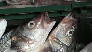 Split In Your Pocket - Fish Market (Ribarnica)