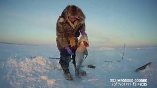 Fishing Ловим монстров Севера Налим на перемет Yakutia