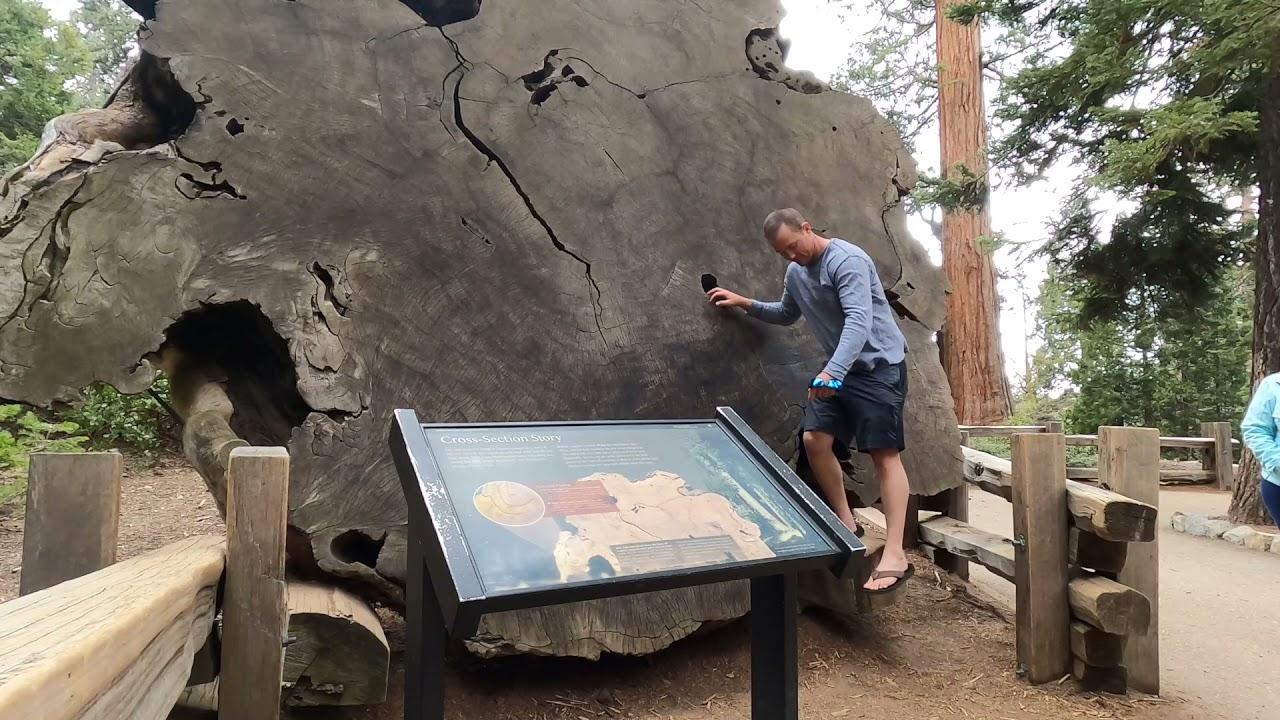 Sequoia National Park 2021