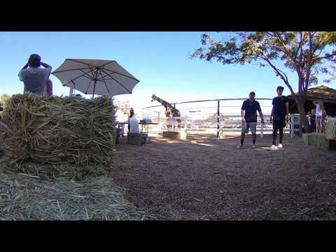 Giraffe in Malibu VR 360 degree camera Theta V