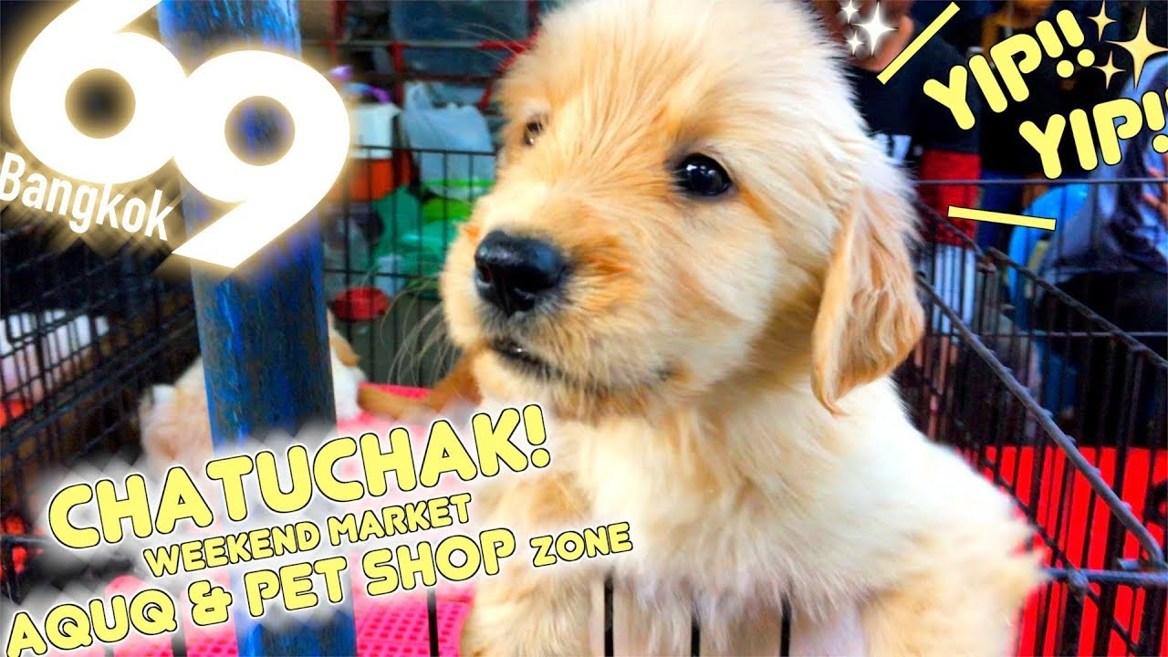 Things To Consider Before Buying A Pet In Thailand The Cost The Heat And A Lot More
