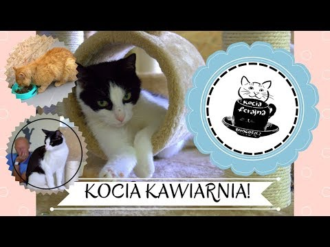 Kawiarnia z KOTAMI! | Cat Cafe!