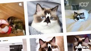 Te zwierzęta to prawdziwe gwiazdy internetu!