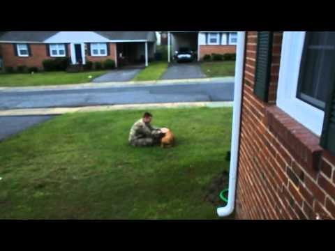 Dog welcomes Soldier Home