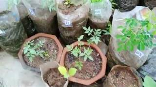 HOME AND TERRACE GARDENING NUMBERS 1 87