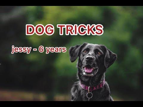 DOG TRICKS | Jessy 6 years