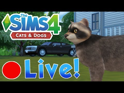 Sims 4 Cats & Dogs: Raccoon Rascals & Rage Goose on the Loose • Finished Livestream!