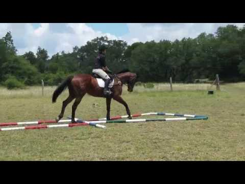 OM Clinic at Storm Ranch