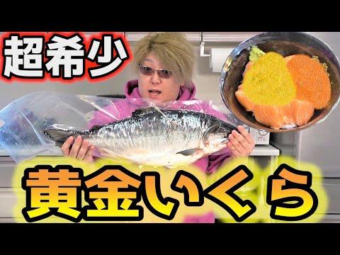 超希少!2万円の黄金イクラでゲーミングクッキング!!
