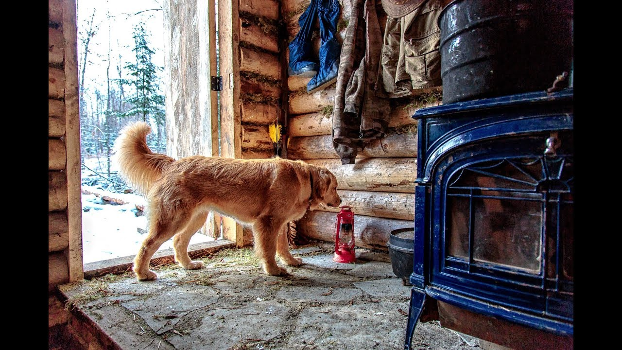building-a-log-cabin-in-the-forest-with-help-from-my-dog-roof-stone-floor-and-woodstove