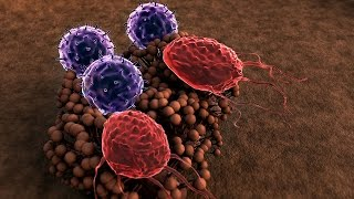 Human Physiology - Cell Mediated Immunity, Part 1
