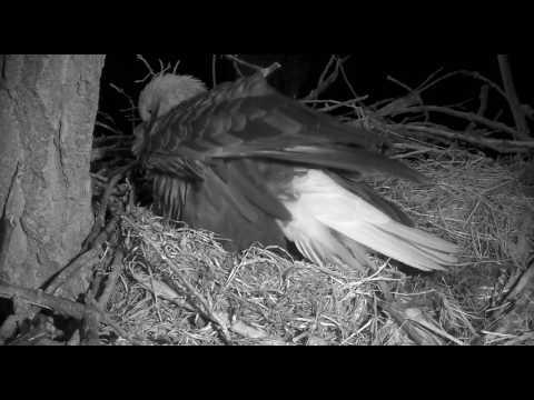 Feb 27 Egg 3