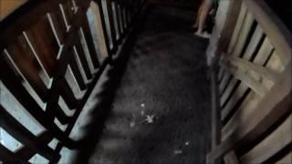 【何とかして!】上海ディズニーランドはインナーキューが汚い【上海のリアル】 thumbnail