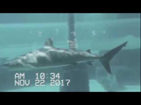 VLOG #5 Los Videos Perdidos de Las Bahamas PT 2!