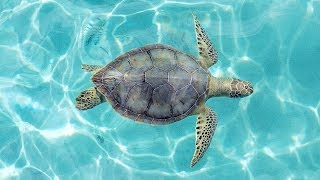 I saw 8 turtles when diving in the Dominican Republic! | Sorelle Amore