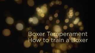 Boxer Temperament