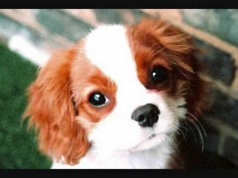 כולם חדשים כלבים חמודים - YouTube KG-97
