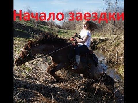 Как заездить лошадь. День первый.