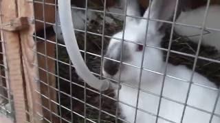 Профилактика кокцидиоза у кроликов.
