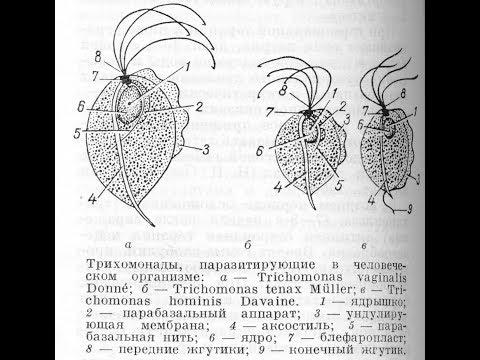 Споры в мазке на флору — Твой гинеколог