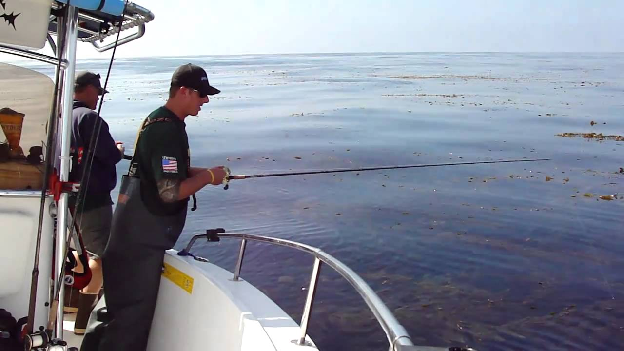 Point loma kelp bed fishing youtube for Point loma sportfishing fish count