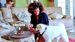 Will My Dog Steal Chicken Off The Table When Left Home Alone ?