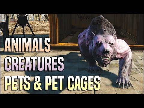 Animals, Creatures, Pets & Pet Cages 🐻 Fallout 4 No Mods Shop Class