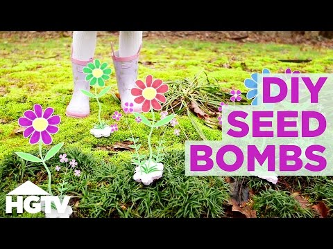 DIY Seed Bombs - Easy Spring Craft Project   HGTV