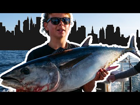Melbourne Bluefin Tuna Rat Kingfish Punching Though The Heads
