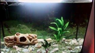 Моя долгожданная покупка. Аквариум 53 л. Часть 1-я.(Хочу показать вам мою новую покупку. Я наконец купила аквариум. Никакого рукоделия и творчества, а просто..., 2015-12-17T17:43:45.000Z)