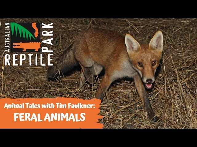 ANIMAL TALES WITH TIM FAULKNER | EPISODE 25 | FERAL ANIMALS
