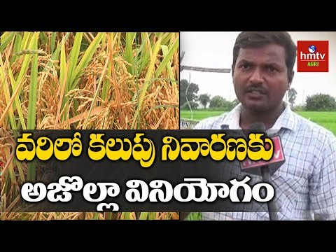 Farmers Earn High Profits From Natural Farming | hmtv Agri