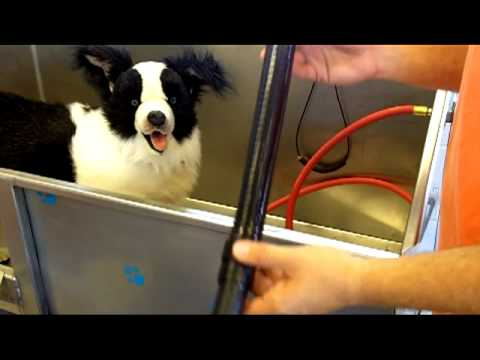 Softouch self serve dog wash youtube softouch self serve dog wash solutioingenieria Images
