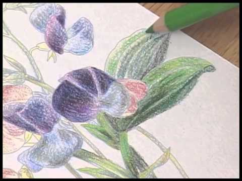 Nuri-e How to color by colored Pencils no.4/5 大人の塗り絵の塗り方