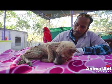 We thought this puppy was dead. Watch her incredible recovery!