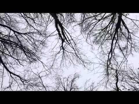 elyse fashion trees