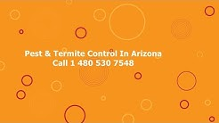 Pest Control Tempe Arizona Pest Removal