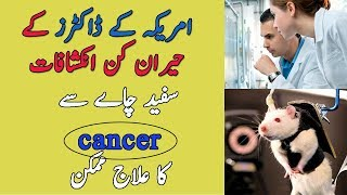 How to treat cancer with white tea || Urdu Hindi
