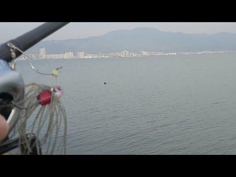 琵琶湖バス釣りライブ2/22(シンカー投げ120m越え)