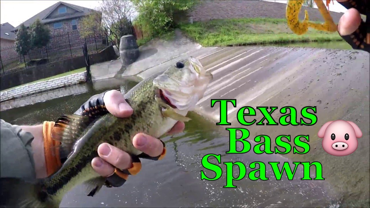 North Texas Pond Bass Fishing (Spawn craw and tube) - YouTube