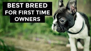 Boston Terriers  Best Dog Breed For First Time Puppy Owners